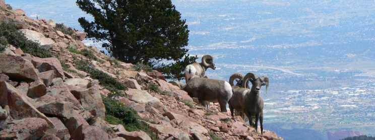Mountain goats on a cliff side